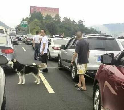 高速路太堵,乘客出来遛狗了!